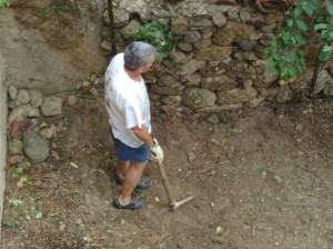 jardin : Guy qui a déraciné le sureau et d'autres arbres